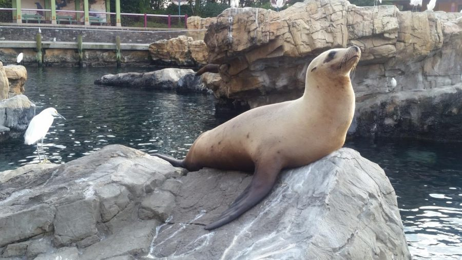 SNHS Dives Into a Trip to Sea World