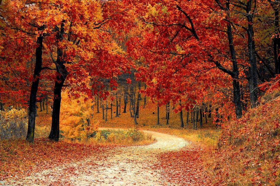 Autumn - A Poem