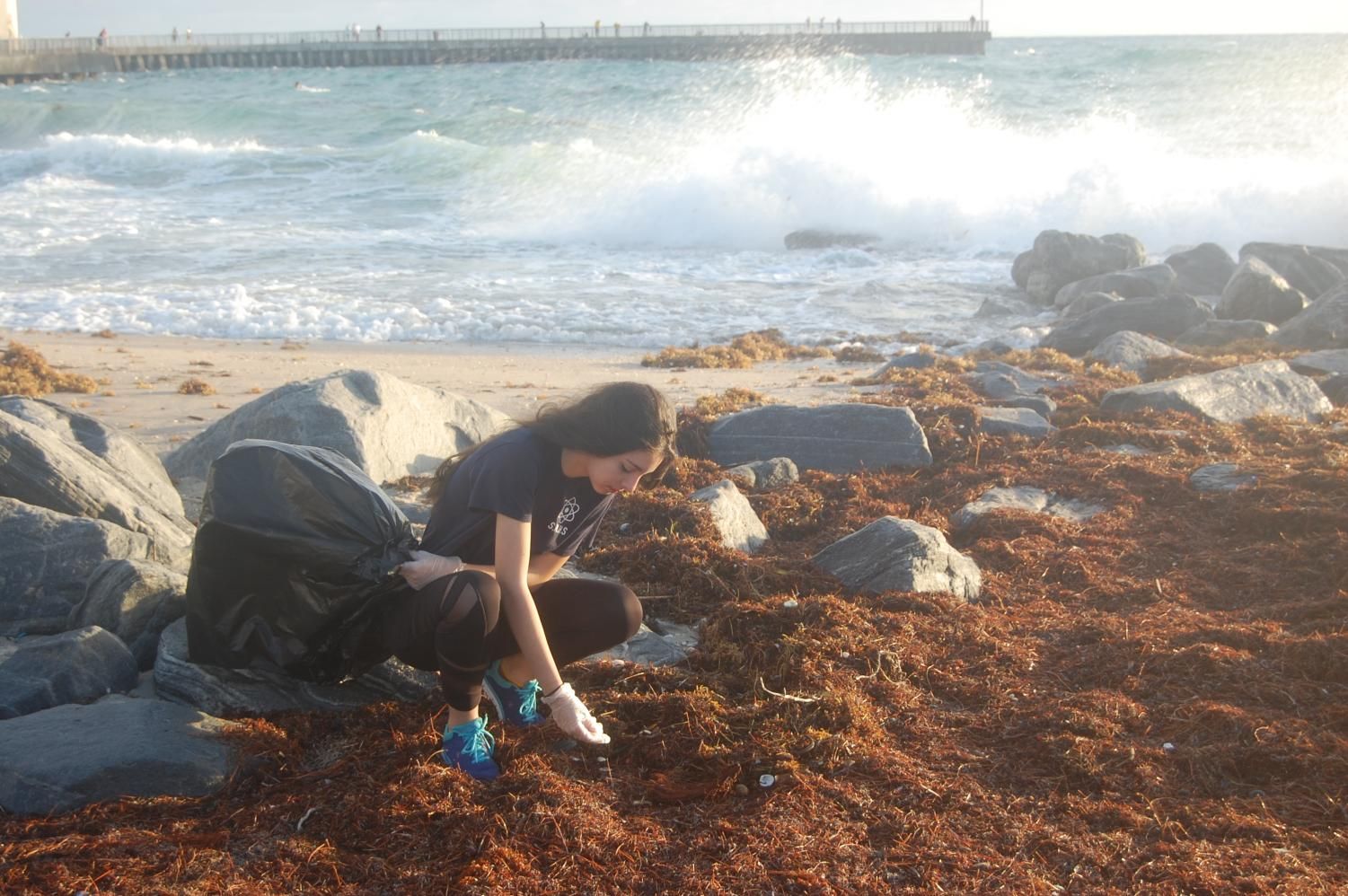 Senior Reyna Jackson searches for trash among the seaweed.
