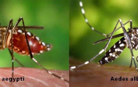 Dengue Fever Just Flew into Florida