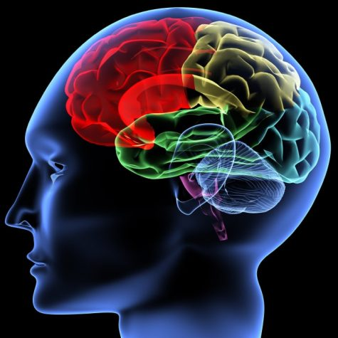 Advanced, color coded outline of the sectors of the human brain. Imagine courtesy of