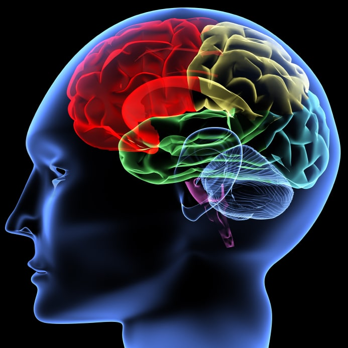 Advanced, color coded outline of the sectors of the human brain. Imagine courtesy of 'www.thehealthbeat.com '